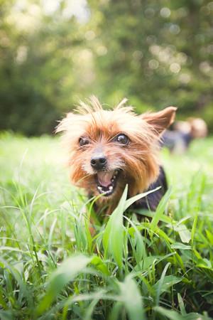 Lenz Summer Pups
