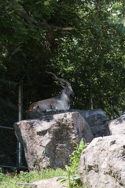 Syracuse Zoo August 2020-16.jpg