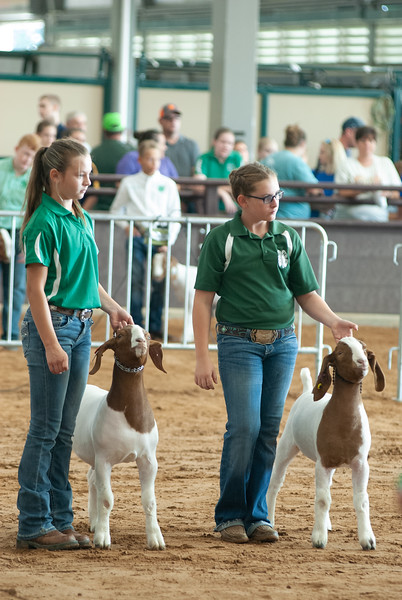 Tulsa_2019_goat_wether_showmanship-17.jpg