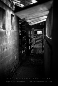This is the hallway the cows move down to get back to the main barn after being milked or having their hooves trimmed/treated.