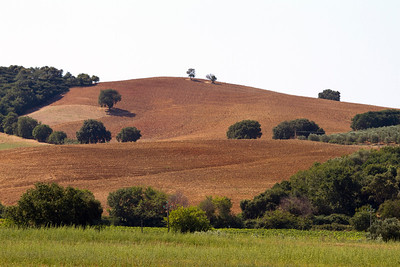 21.08.2011 // Grossetano