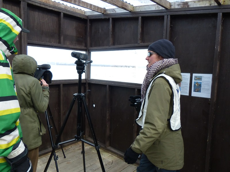 Spotting scopes set up for Park visitors inside the viewing shelter.