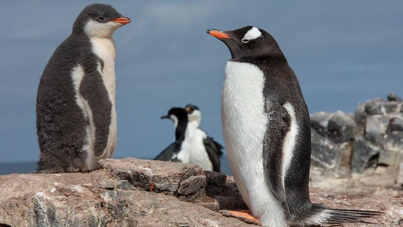 2019_01_Antarktis_01225.jpg