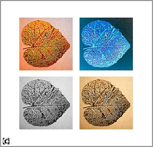 Fotobewerking - Photo Editing