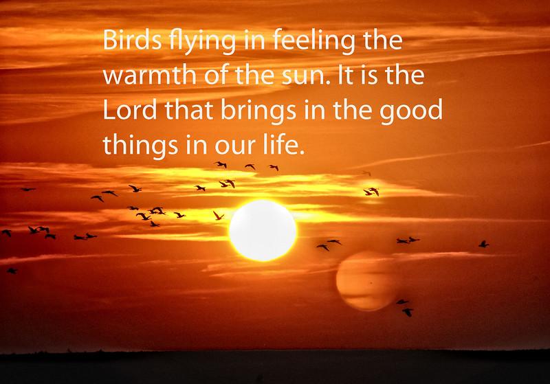 09  Morning Birds feel the warmth of the sun ...jpg