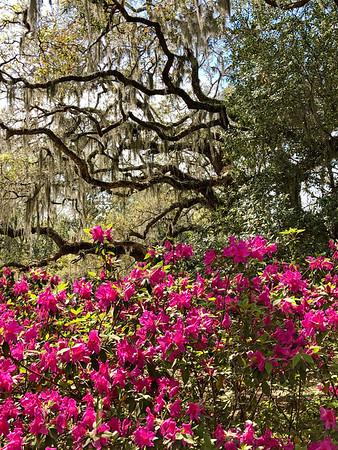 South Carolina - Plantation Tours, Georgetown; with Teresa and Barbara; 3-30-2019