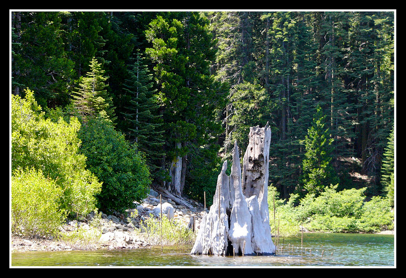 Stump from the old logging days.  I can imaging late nights on this lake... the imagination would run wild with monsters in the stumps.
