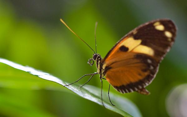Key West Butterfly Conservancy - Dec., 2018