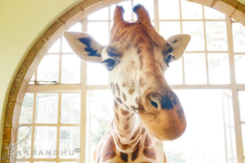 Safari-Africans-088.jpg