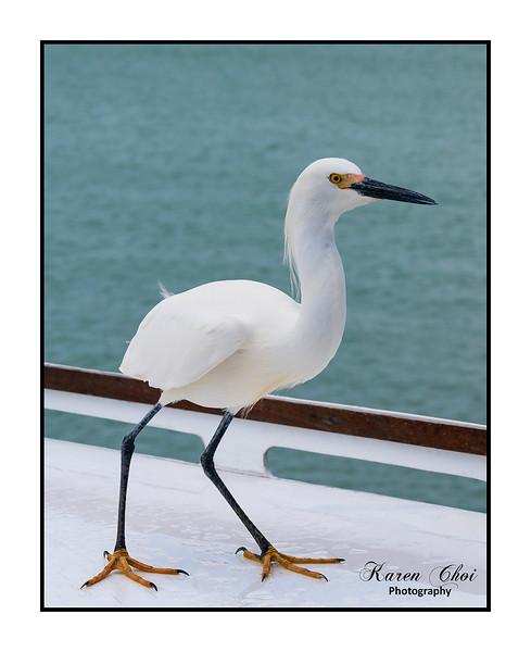 Egret sm.jpg
