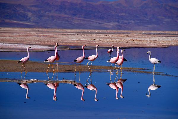 Chile 2009