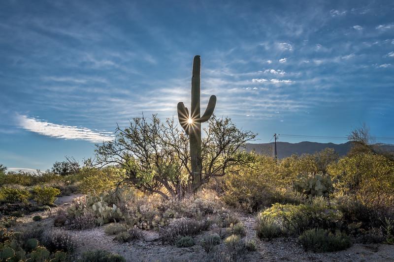BR -  Saguaro and Sunburst #1