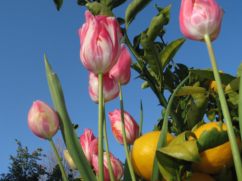 Flowers  7288.jpg