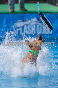 Splash Dogs (Sat) 05-13-2017