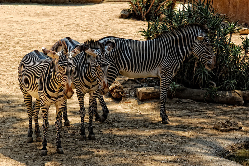 Los Angeles Zoo_24
