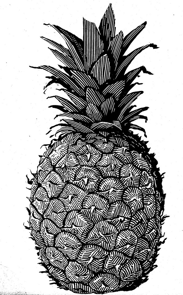 """""""Pineapple""""; I made this drawing (back around 1994) for my amusement, and as a demonstration of texture-rendering on scratchboard."""