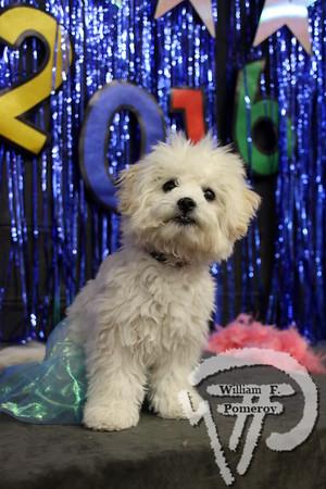 CHATHAM DOG CLUB — dog club — Chatham, MA 5 . 20 - 2016