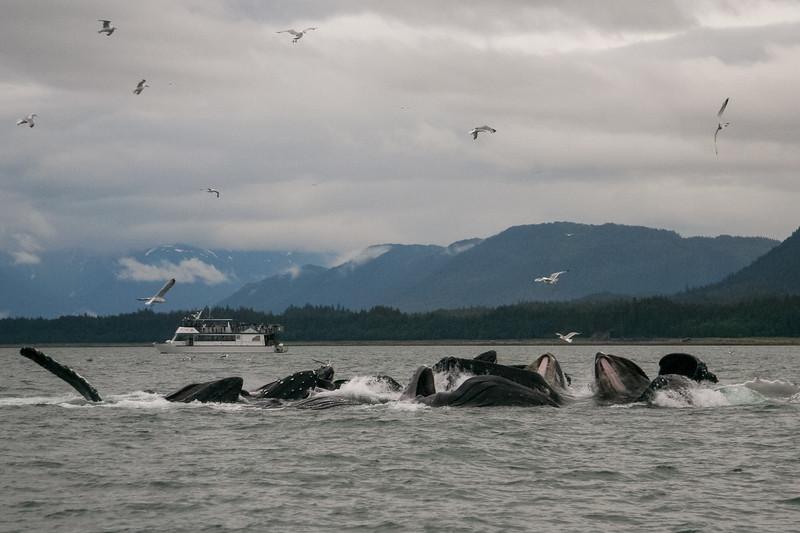 Alaska 2009-367.jpg