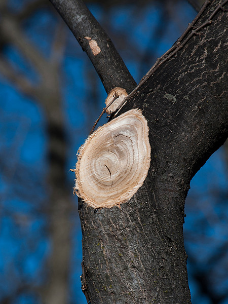 tree_limb-wdsm-20feb16-09x12-001-6553
