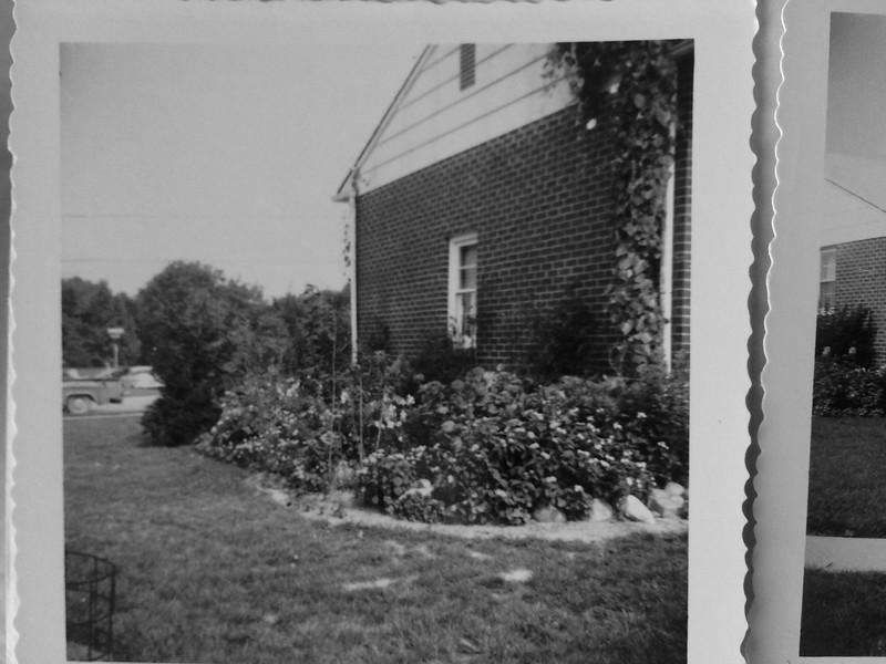 The garage garden