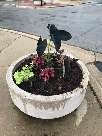 2020 Adopt-A-Planter