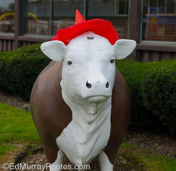MOOOOOO HU HU HU HA HA HA !!!: The steak house has dressed up their cows for Halloween   10/25/2012