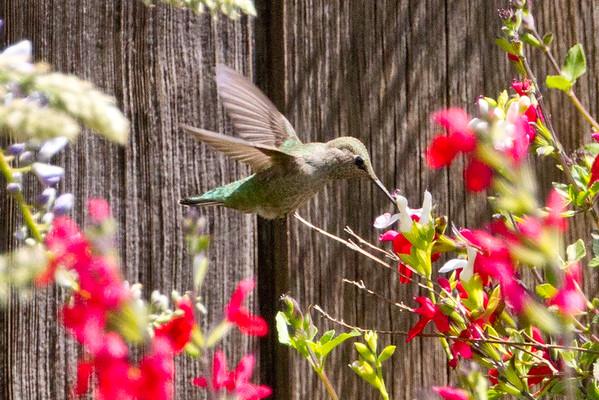 Backyard_Birds-2012