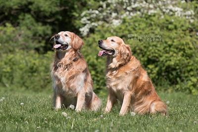 Maverick & Sunny