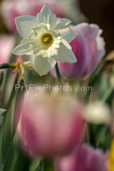 Flowers Dallas Arboretum 3-5-16