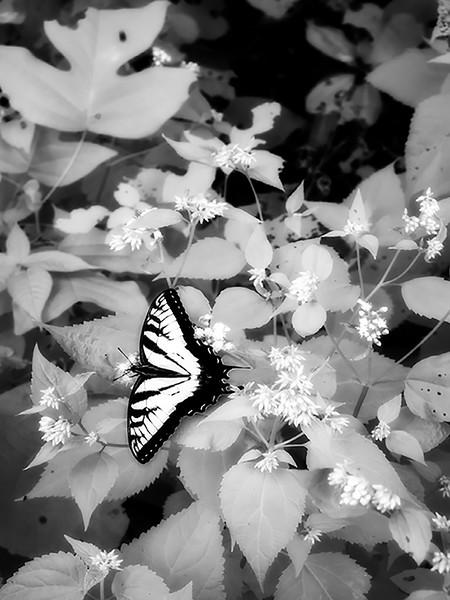 Butterfly - Paul Vassar
