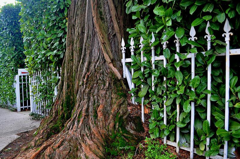 fenced 12-28-2010.jpg