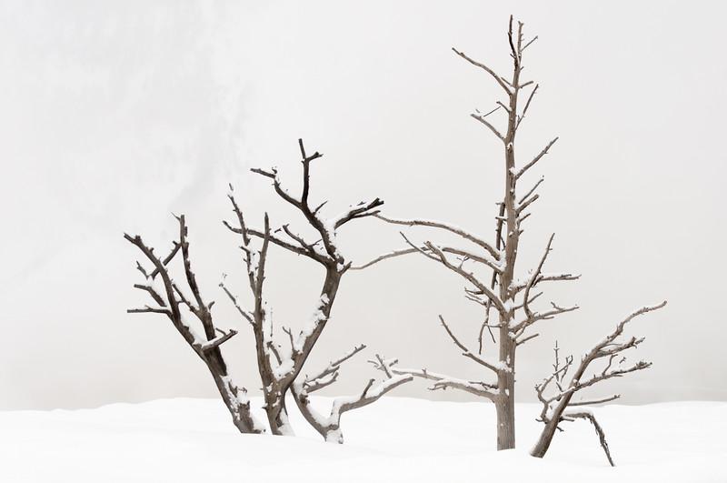 Winter Sticks 6