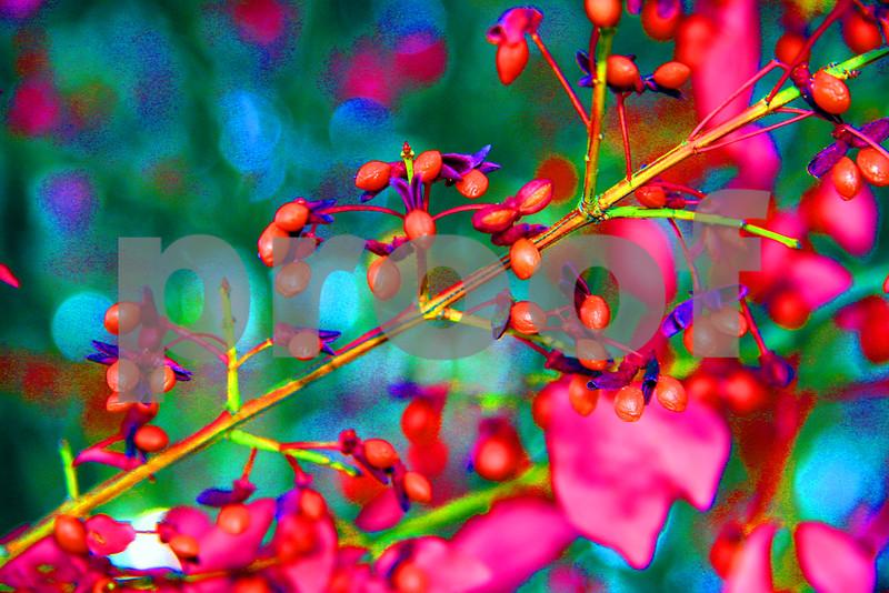 berrieswild.jpg