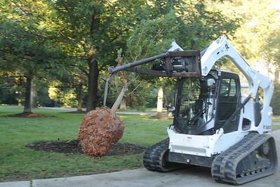 Annual Milliken Tree Planing