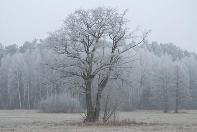 2007-12-27 Puszcza Biała
