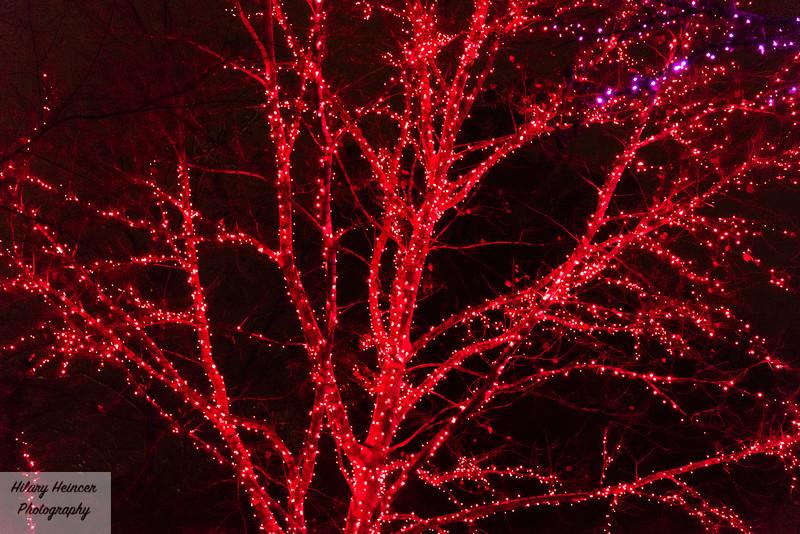 Christmas Lights-102.jpg