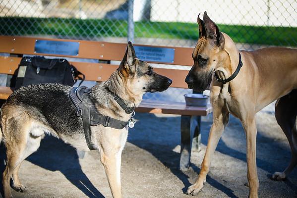 Lakewood Dog Park