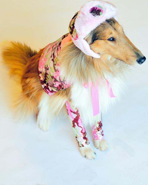 Costumed Dog Photos - Jesse Ascher 087.jpg