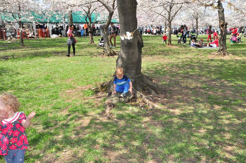 Cherry Blossoms 2014 089.jpg