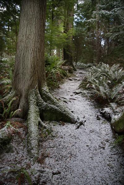 DSC_1078 Wilbert trail snow 1.14.20.jpg