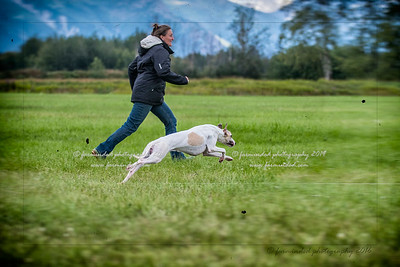 07/29/2016 - Cook Inlet Kennel Club