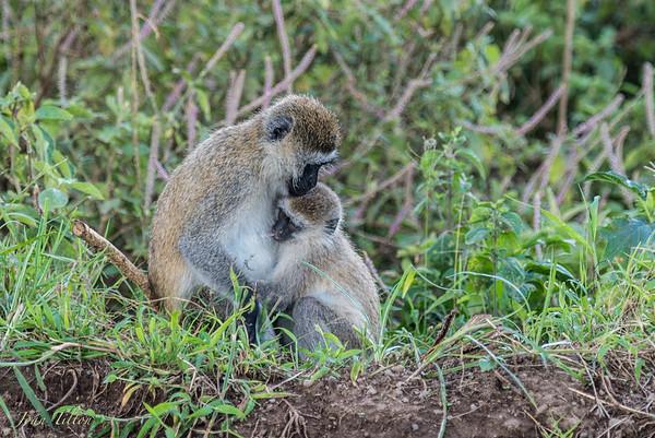Africa, Kenya Safari