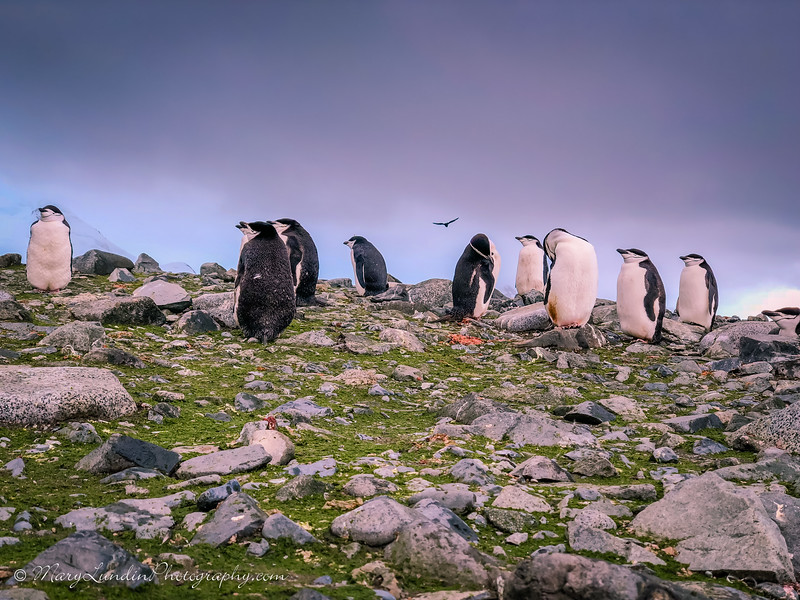 Antarctic-66