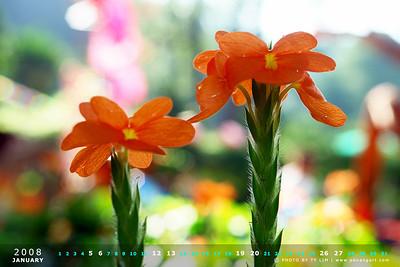 Flora Calendar Wallpaper 2008