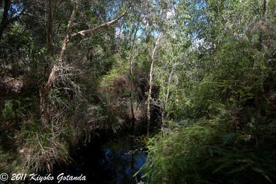 Rash Trail Creek*