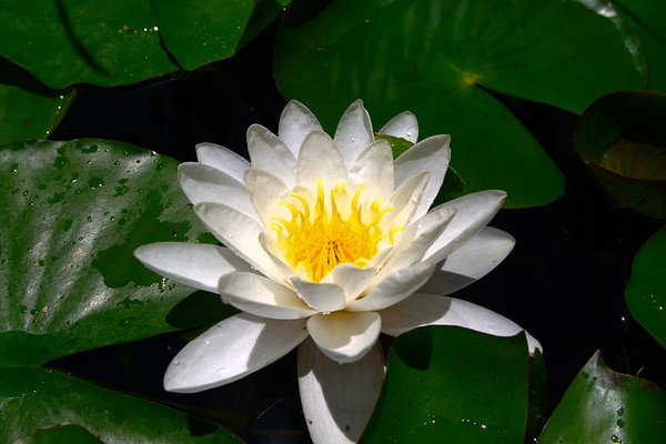 Getty Villa - White Lotus