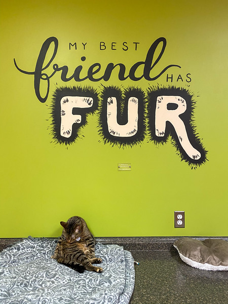 Tiny Lions cat cafe in Ann Arbor