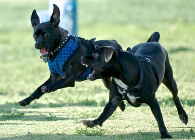 Dog Park 5-6-14