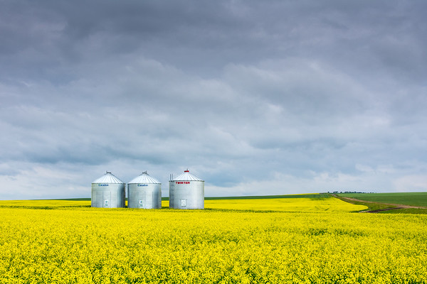 Grain Storage in Canola Field in Saskatchewan, Canada
