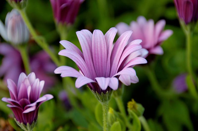 Coronado Island Flower.jpg